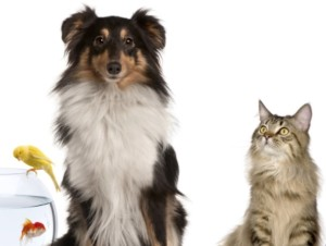 NANO2 MINI FP – Air Purification for Pet Owners