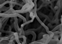 Nanopareil