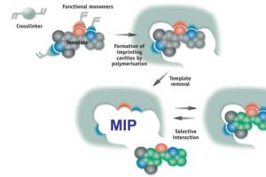 Molecularly Imprinted Polymer (MIP)